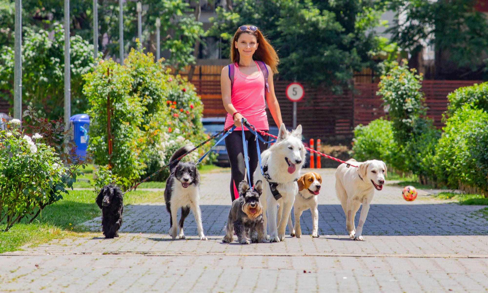 Tina's Pets